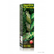 Dripper Plant Large