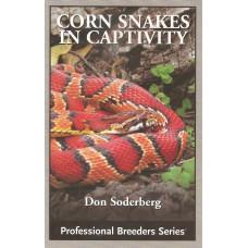 Cornsnakes in Captivity
